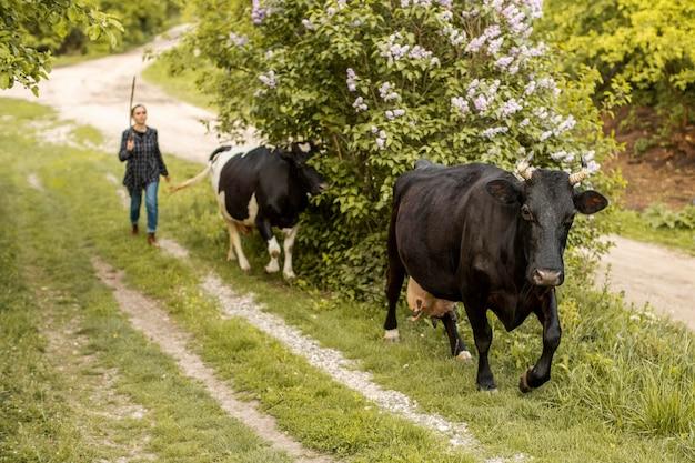 Mujer con vacas en campo Foto gratis