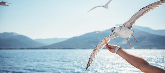 Mujer viajando en ferry y alimentando a las gaviotas Foto Premium