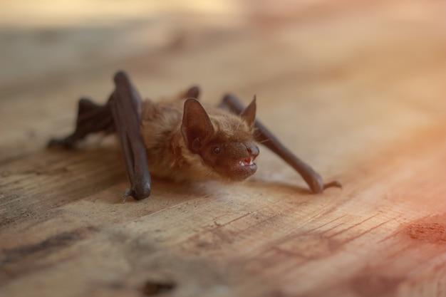 El murciélago se sienta en una mesa de madera. Foto Premium