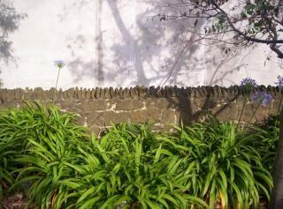 Muro de piedra, el eucalipto Foto gratis