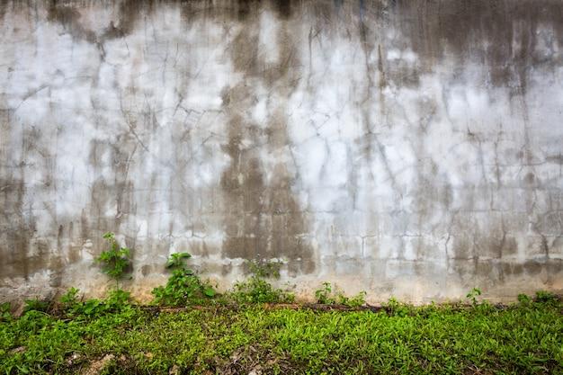 Muro de piedra con humedad y césped Foto gratis