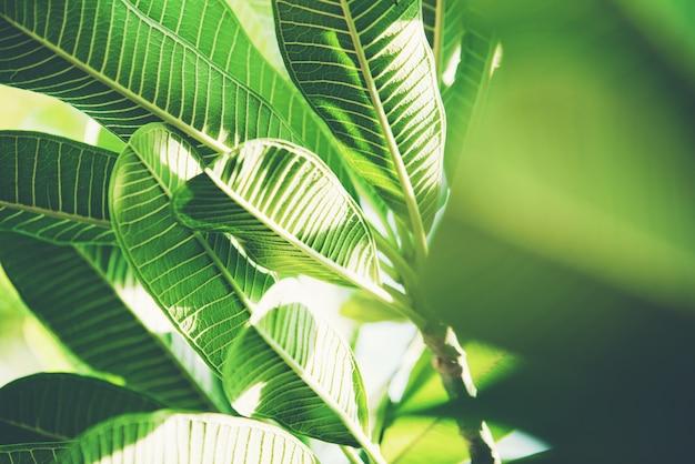 Naturaleza abstracta hoja verde Foto gratis