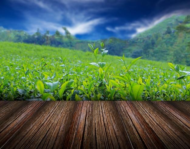Naturaleza con plantilla de fondo de cielo azul Foto Premium