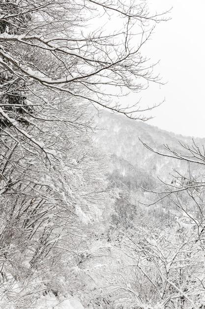 Nevadas con bosque Foto Premium