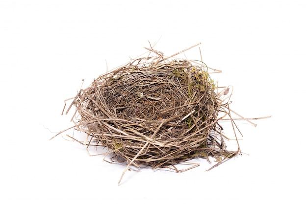 Nido de pájaro, aislado, nido salvaje de un pajarito Foto Premium
