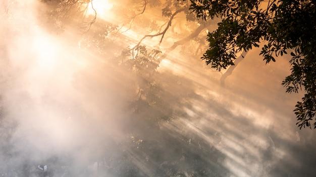 Niebla o humo de fondo. fondo abstracto de smog Foto Premium