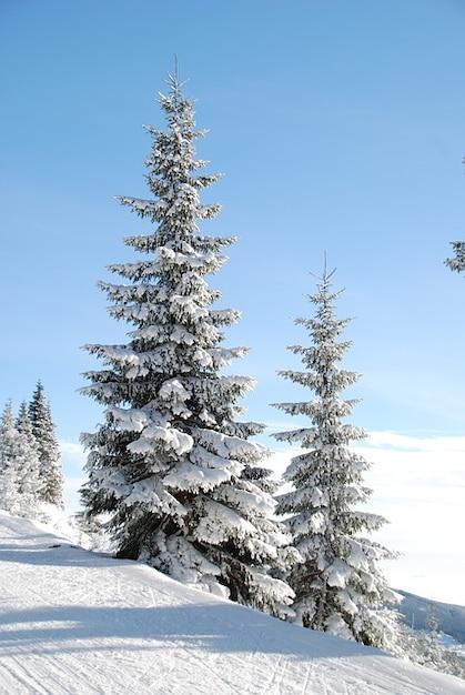 Nieve invierno rbol de navidad den descargar fotos gratis - Arbol navidad nieve ...