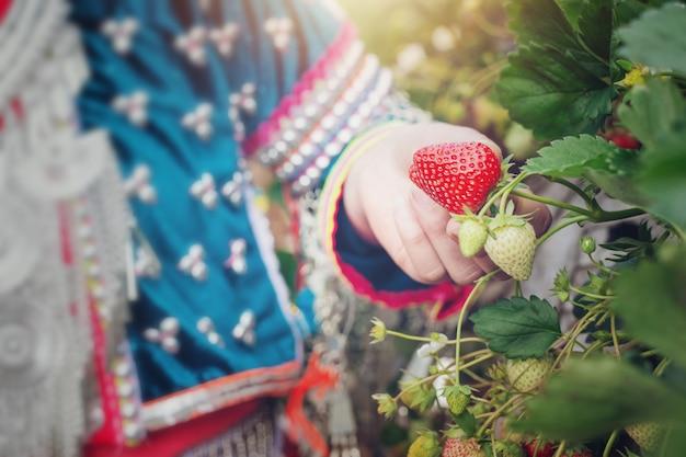 Las niñas tribales están recogiendo fresas en la granja. Foto gratis