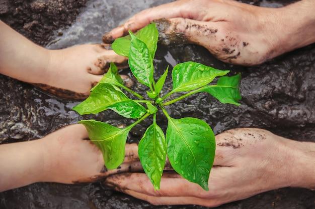 Un niño planta una planta en el jardín. enfoque selectivo Foto Premium