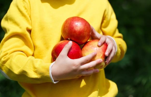 Niño, tenencia, manzanas Foto Premium