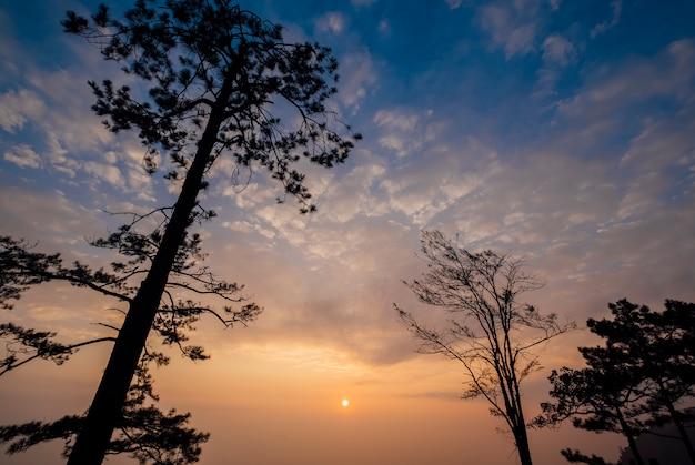 Nube, cielo azul, arbol y puesta de sol. Foto gratis