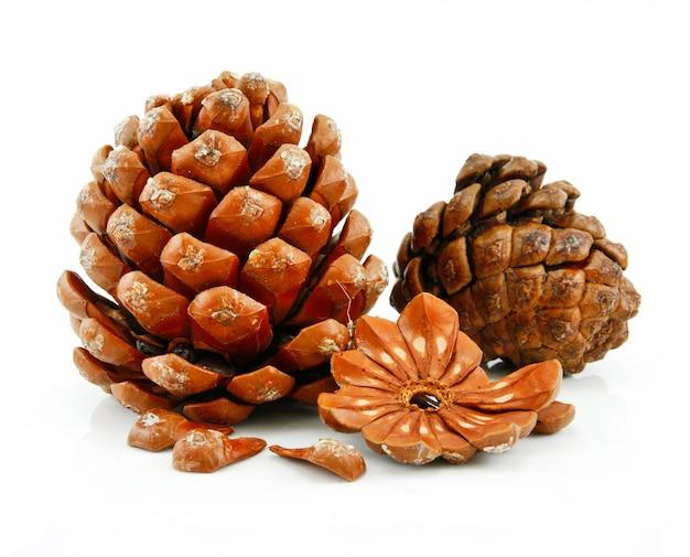Nueces y cono de pino siberiano aisladas sobre fondo blanco Foto Premium