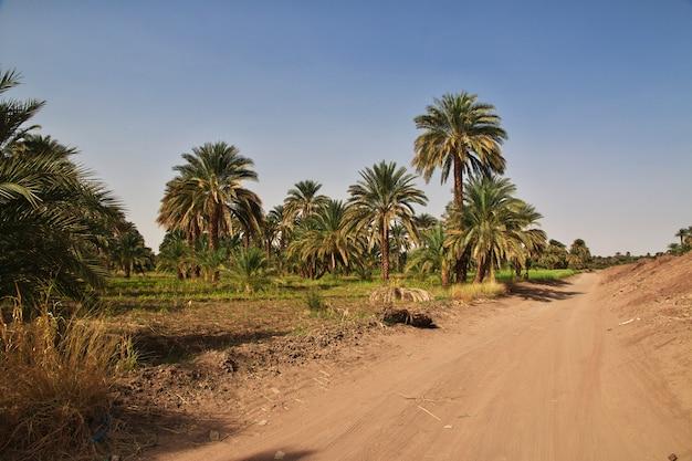 El oasis en el desierto del sahara, sudán Foto Premium