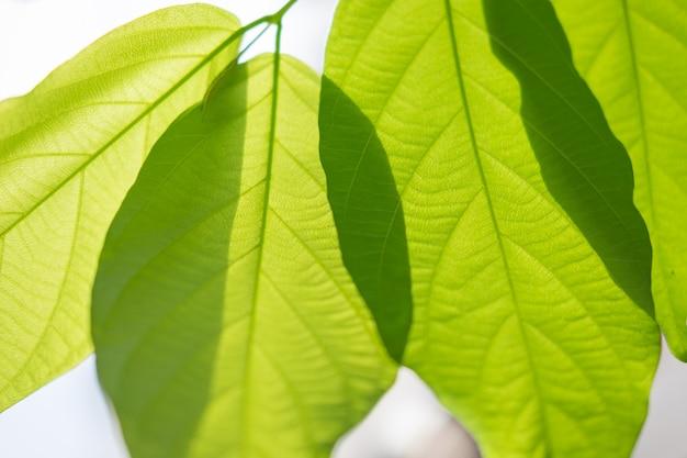 Opinión de la naturaleza de la hoja verde bajo luz del sol. plantas verdes naturales Foto Premium