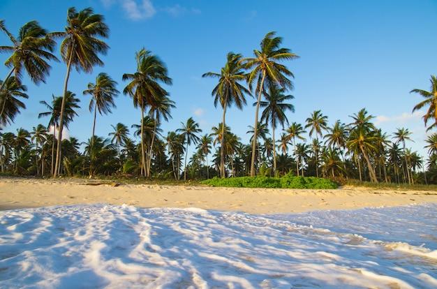 Orilla de la playa tropical Foto Premium