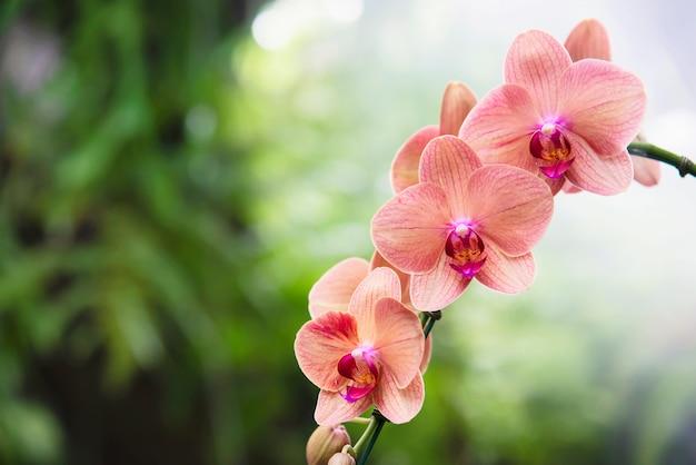 Orquídea naranja claro con hoja verde, flor de flor hermosa naturaleza Foto gratis