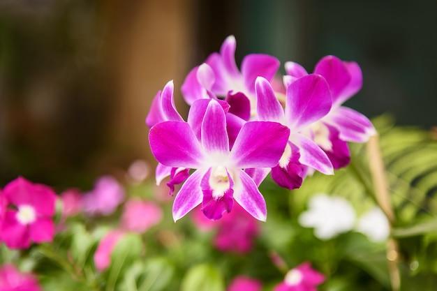 Orquídea rosa y hojas Foto Premium