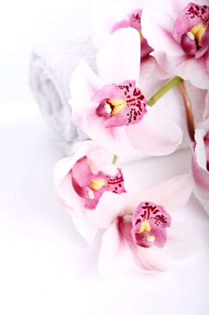 Orquídea sobre fondo blanco Foto gratis