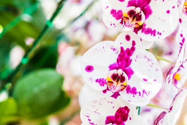 Orquídea Foto gratis