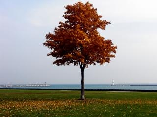 otoño, otoño Foto Gratis