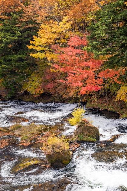 Otoño otoño bosque nikko japón Foto Premium