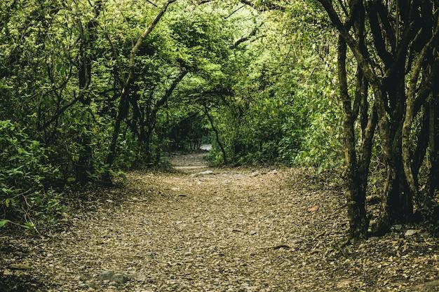 País medio ambiente pista hoja rambling footpath Foto gratis