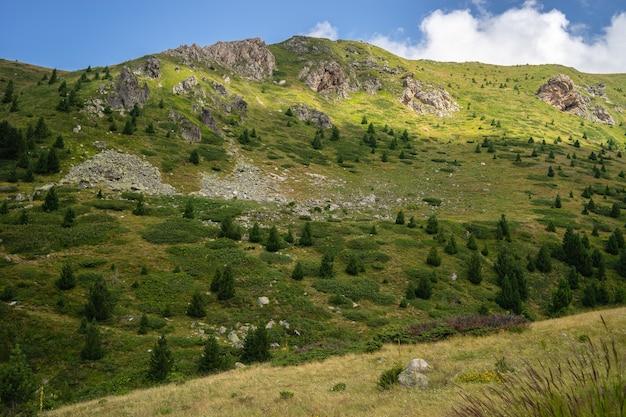Paisaje de colinas cubiertas de vegetación bajo un cielo azul y la luz del sol durante el día Foto gratis