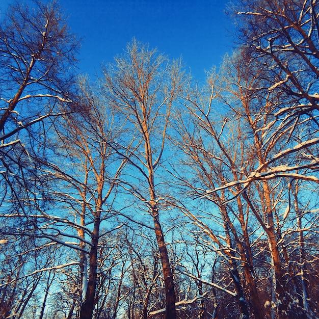 Paisaje de rboles sin hoja en invierno descargar fotos for Arboles de hoja perenne sin fruto