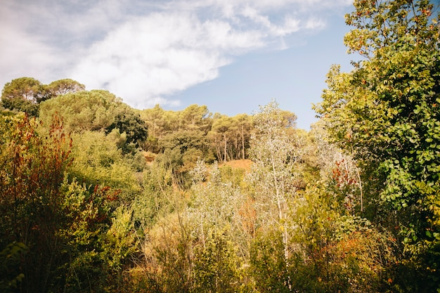 Paisaje de bosque Foto Gratis