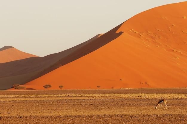Paisaje de una duna de arena gigante con un antílope en busca de alimento en primer plano Foto gratis