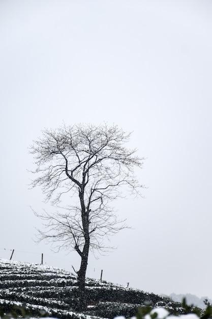 Paisaje de invierno con árbol sin hojas | Descargar Fotos gratis