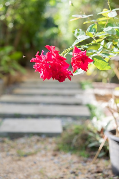 Paisaje moderno camino de piedra simple en decoración de jardín Foto Premium