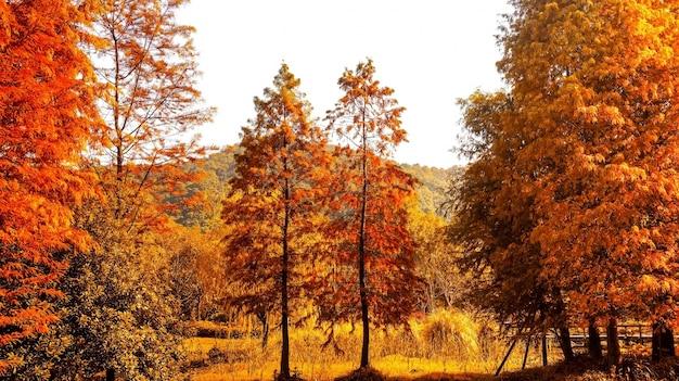 Paisaje natural en colores cálidos | Descargar Fotos gratis