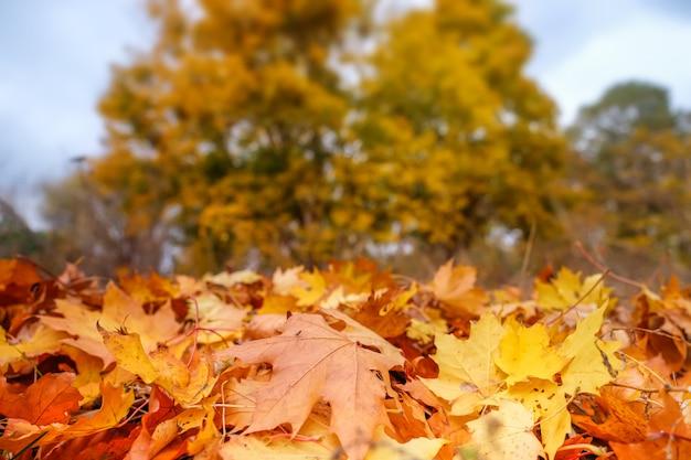 Paisaje de otoño con árboles amarillos y follaje en el suelo en el parque. Foto Premium