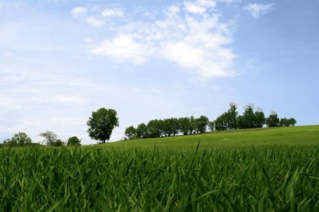 Paisaje tranquilo de primavera Foto Premium
