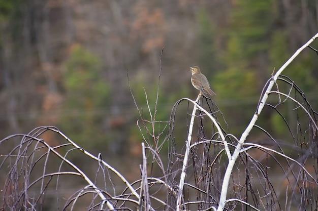 Pájaro en el árbol animal en la naturaleza. fondo colorido natural. Foto gratis