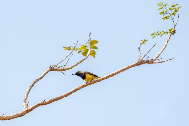 Pájaro en el árbol Foto Premium