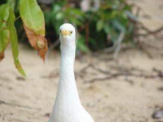 pájaro blanco, pájaro Foto Gratis