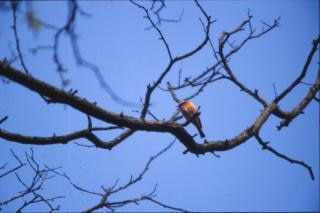 pájaro en el árbol, pájaro