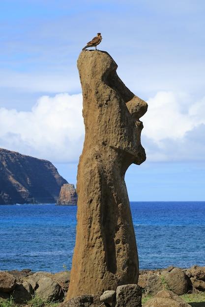 Pájaro posado sobre la cabeza de moai con el océano pacífico en el fondo, ahu tongariki, isla de pascua, chile Foto Premium