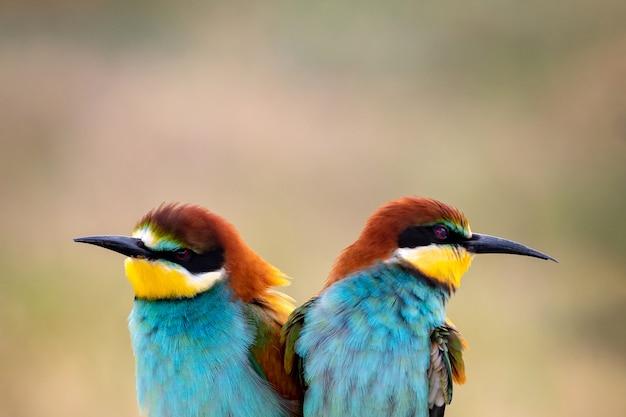 Pájaros coloridos en una rama Foto Premium
