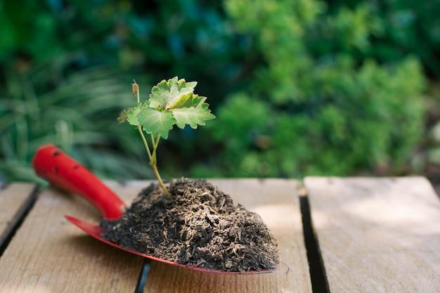 Pala con pila de tierra y plántula. Foto gratis