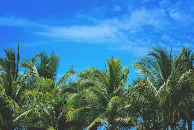 Palmera del coco y naturaleza del cielo en el fondo del mar con el espacio de la copia. Foto Premium