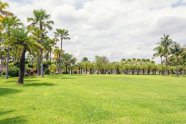 Palmera en escena de hermoso parque en el parque con el campo de hierba verde Foto Premium