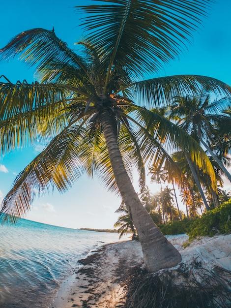 Palmeras caribeñas en la playa Foto Premium