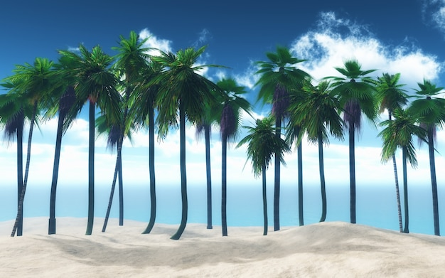 Imagenes De Palmeras En La Playa Fondos De Pantalla