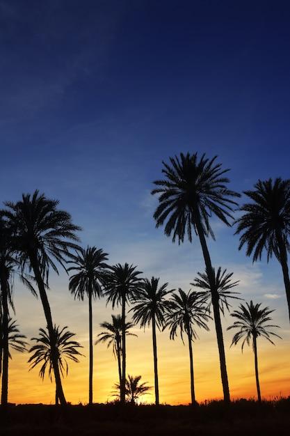 Palmeras puesta de sol dorado azul cielo luz de fondo Foto Premium