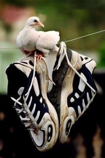 paloma blanca y zapatos Foto Gratis