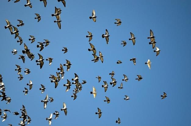Palomas animales cielo paloma bandada de aves Foto Gratis