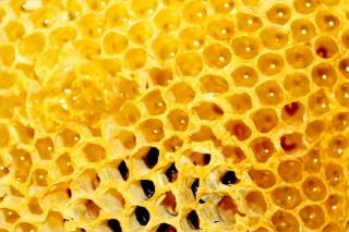 Panal de miel, panal de abeja Foto Gratis